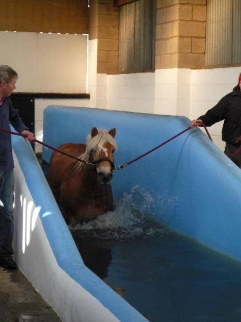 Widget and Geri - Equine Swim Day